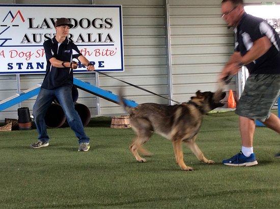 Lawdogs Australia: photo4.jpg