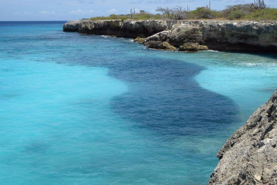 Washington-Slagbaai National Park, Bonaire: Large shoal of fish at Bise Morto