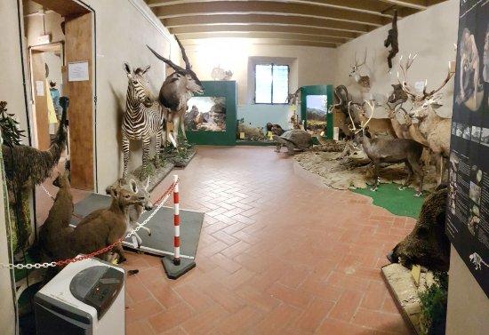 Capannoli, إيطاليا: IMG-20170409-WA0011_large.jpg