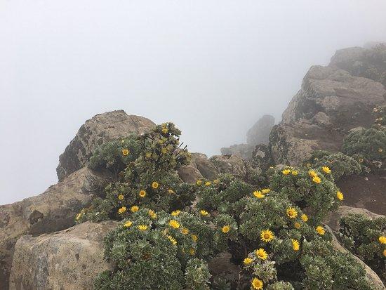 Pico de las Zarzas : Au sommet