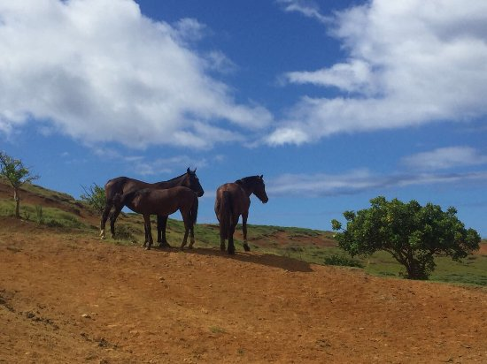 Easter Island Travel: photo2.jpg