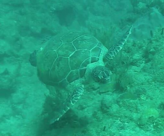 Aquatica Dive and Surf: FB_IMG_1487059971592_large.jpg