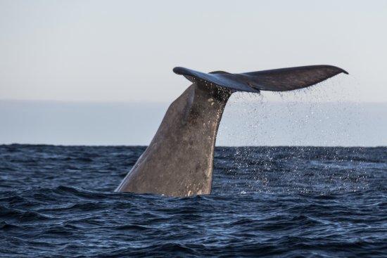 Анденес, Норвегия: Walbeobachtung