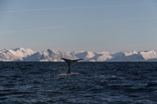 Andenes, النرويج: Walbeobachtung