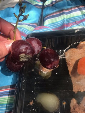 Kievits Kroon : Moldy grapes with the picnic experience