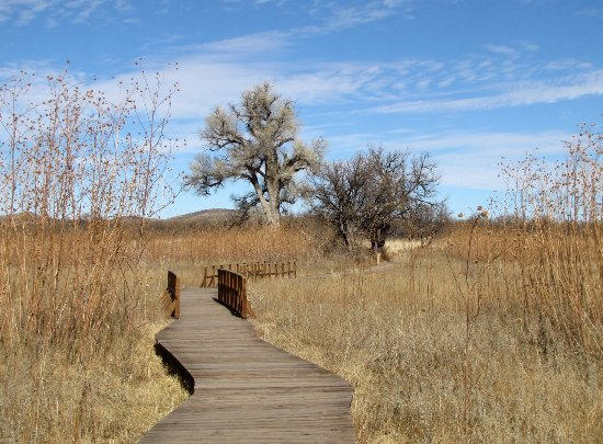 Arivaca cienega boardwalk