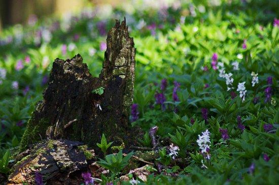 Freeden: Natur Pur - Ein muss für Foto Freaks und Wanderer