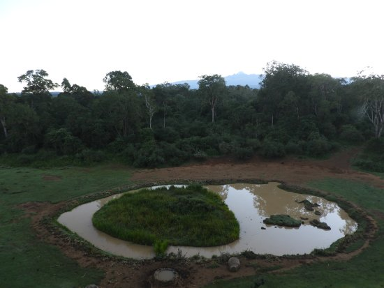 Serena Mountain Lodge: View of the waterhole