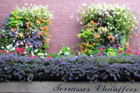 Fleurs du restaurant Nelson en septembre - Photo de Jardin Nelson ...