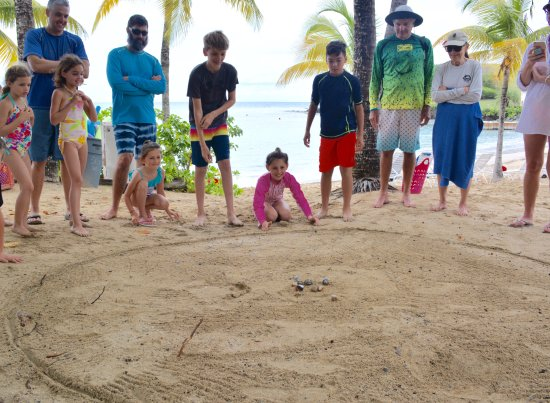 The Buccaneer St Croix: Crab races....a family favorite.