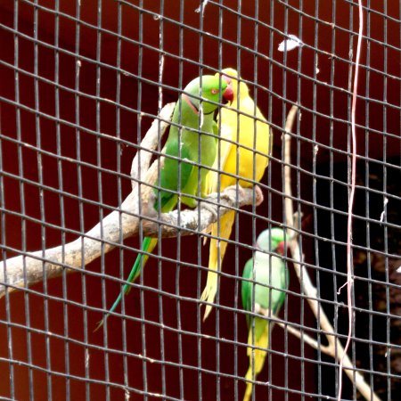 green and yellow parrot picture of dehradun zoo dehradun district