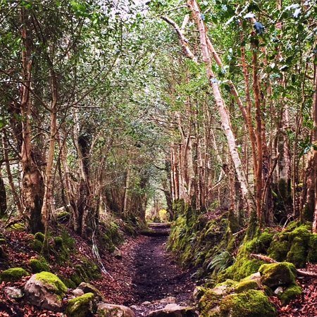 Loughrea, Irlanda: Trail near Enchanted Forest