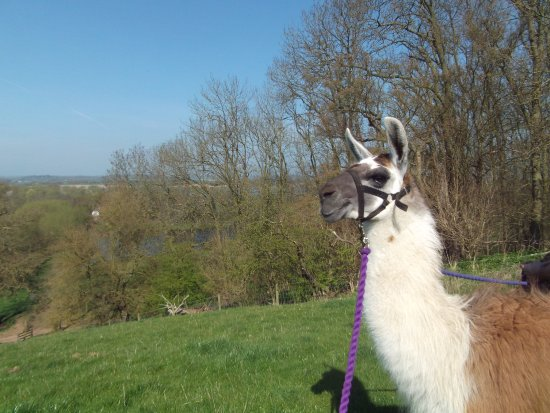 Barton-under-Needwood, UK: Naughty Bob admires the scenery
