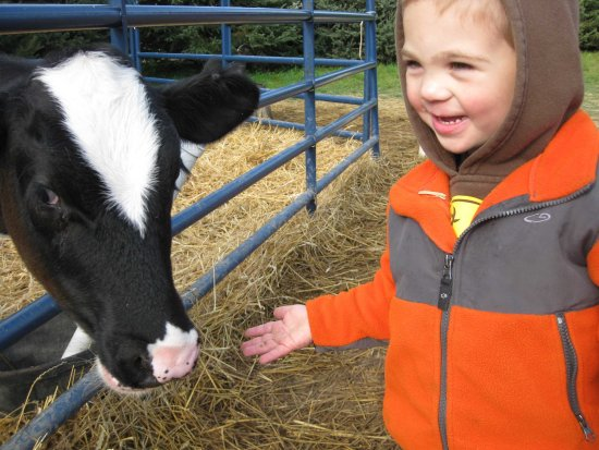 Scottsville, Nova York: Meet the farm animals.