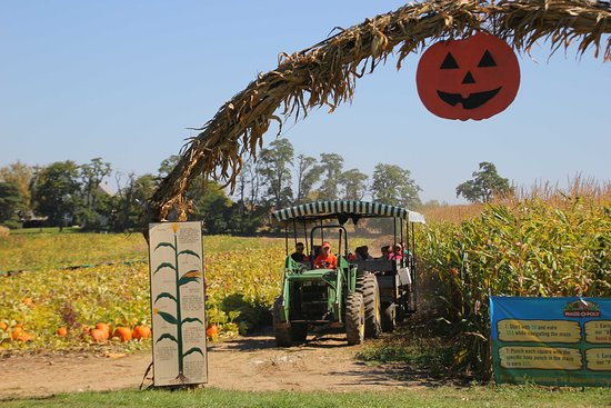 Scottsville, Nova York: Tractor draw hay rides to pick your own pimpkins.