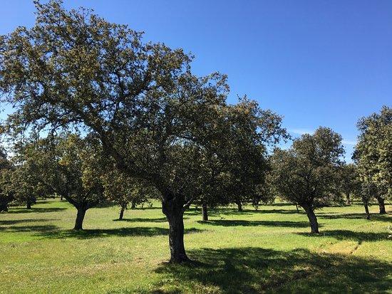 Villanueva de Córdoba, España: Maravilloso El Valle de los Pedroches