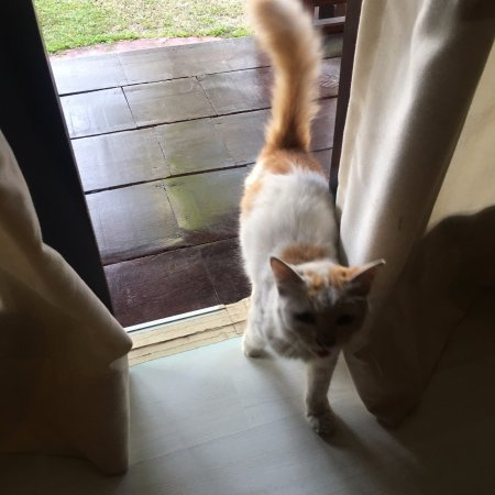 The Bohok Langkawi : Cute cat on the property