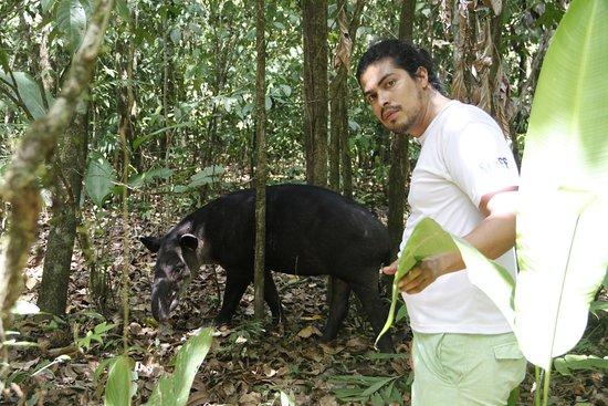 Drake Bay, Costa Rica: tapir and Allan