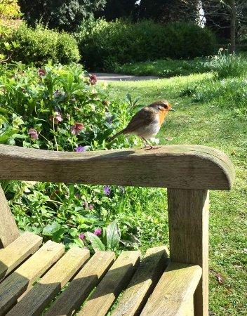 Sat next to this little fella in Dartington Hall Gardens