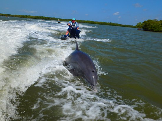 Capt. Ron's Awesome Everglades Adventures: Dolphins @ play!