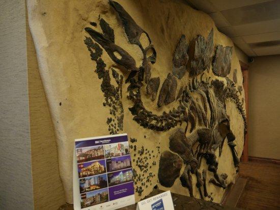 Lakewood, CO: Large stegosaurus cast greet you upon entry.