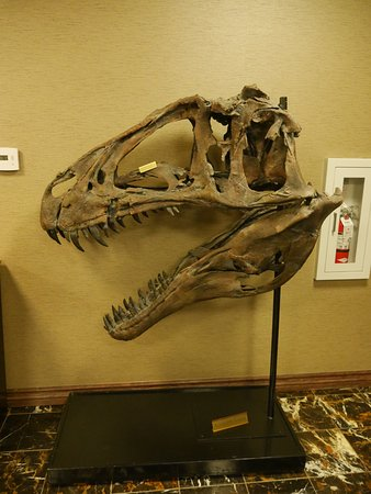 Lakewood, Kolorado: Acrocanthosaurus skull in the lounge area.