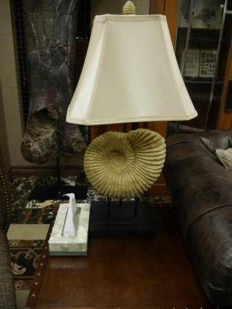 Lakewood, Kolorado: Ammonite fossil lamps