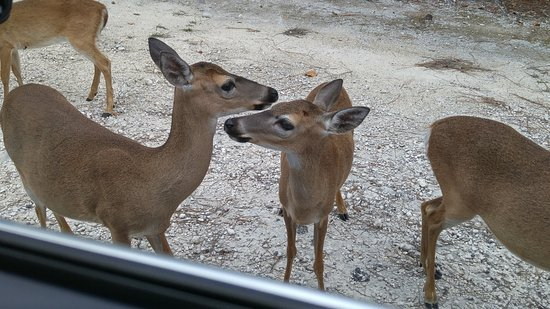 National Key Deer Refuge Photo