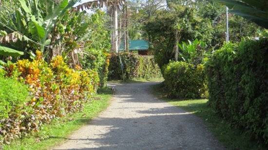 Cocles, Costa Rica: Road to Physis off the main road