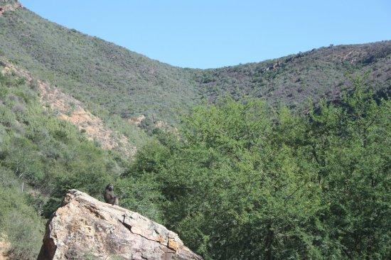 Eastern Cape, Νότια Αφρική: IMG_6150_large.jpg