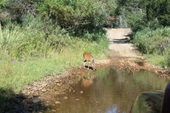 Eastern Cape, Νότια Αφρική: IMG_6140_large.jpg