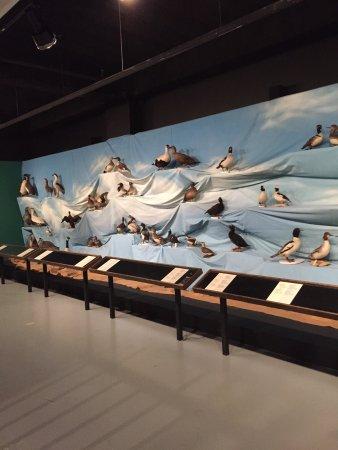 New Brunswick Museum: photo8.jpg