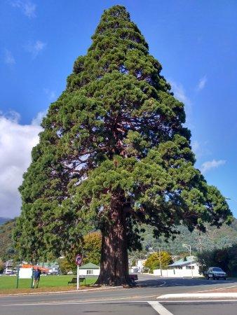 Sequoia Lodge: IMG_20170409_102213_HDR_large.jpg
