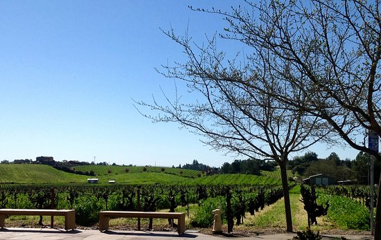 Ridge Vineyards Lytton Springs : View from the patio.