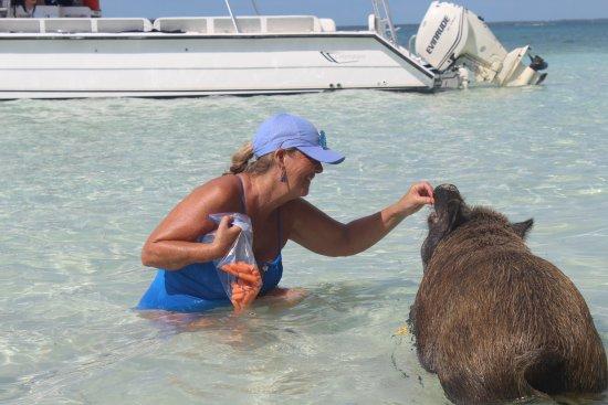 Brendal's Dive Center: Claire traines the piggy!