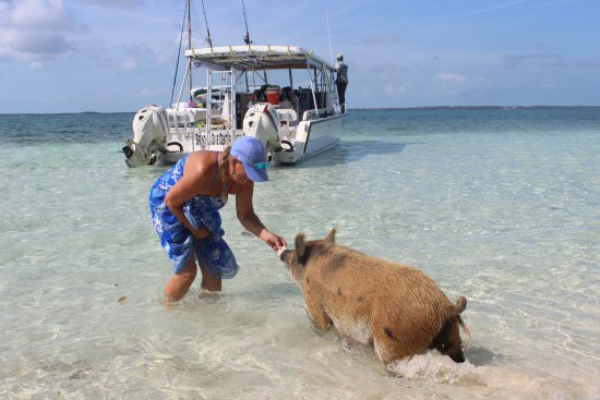 Brendal's Dive Center: swimming pigs came to the boat and we fed them and swam with them