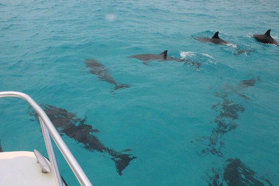 Brendal's Dive Center: 100s of Dolphins awam aroung the boat for an hour! The more we cheered the more they played!