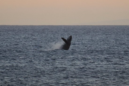 Kaleialoha Condominiums: Watching whales breach from our lanai