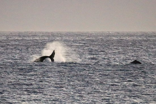 Kaleialoha Condominiums: Watching whale activity from our lanai