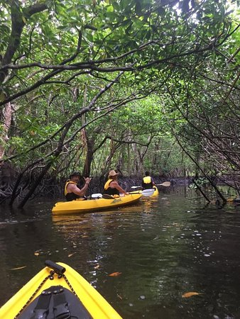 Toberua Island, Fiji: Excursion-kayaking in the mangroves