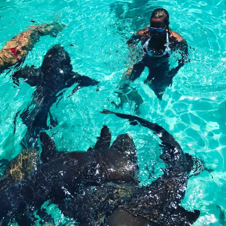Swimming with the nurse sharks.....so cool! - Picture of Exuma ... on