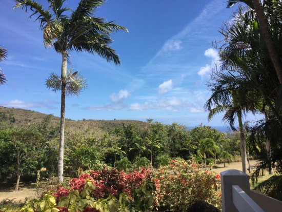 Montpelier Plantation & Beach: The view from our room, you can watch the monkeys caper past.