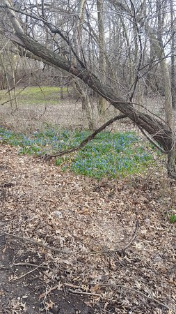 Janesville, WI: Spring flowers