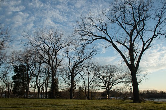 Chestertown, MD: Oak trees at sunset