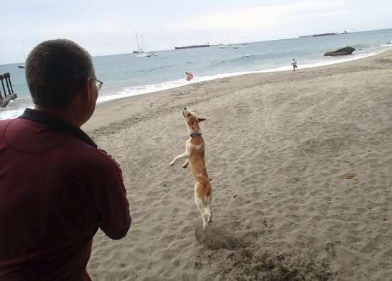 St. Eustatius: Friendly pups at the beachside dive shop.