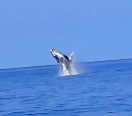 Sint-Eustatius: Was able to see whales one day, breathtaking!!