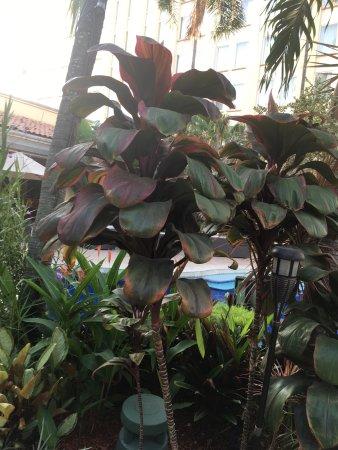 Real InterContinental San Pedro Sula at Multiplaza Mall: photo3.jpg
