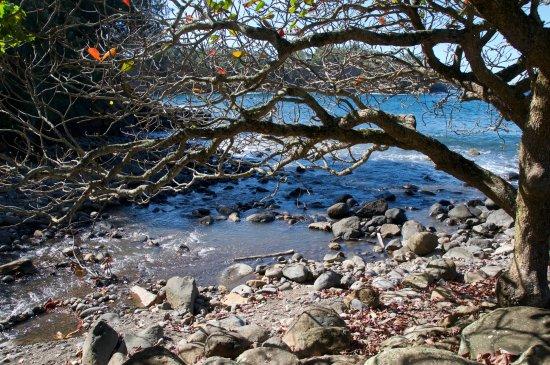 Kapaau, Hawái: Lovely tree