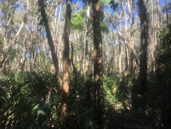 Maroochy Wetlands Sanctuary Reserve