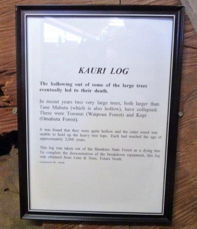 Matakohe, Новая Зеландия: The story of the Kauri log.